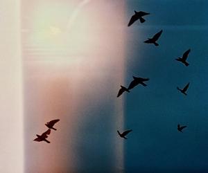 bird, sky, and photography image