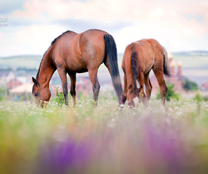 horses, nature, and summer image