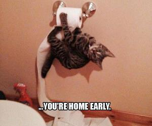 cat, funny, and home image