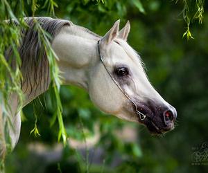 horse, summer, and лето image