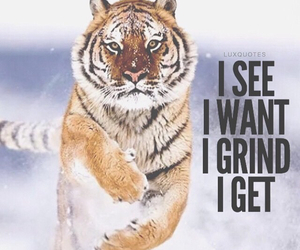 tiger and luxquotes image