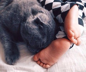 baby, cat, and cute image