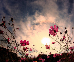 flowers, photography, and sky image