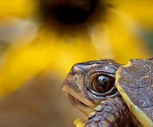turtle, animal, and nature image