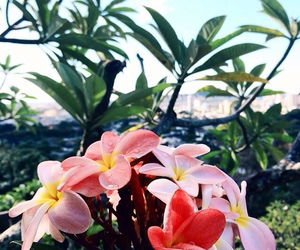 flowers and tropical image