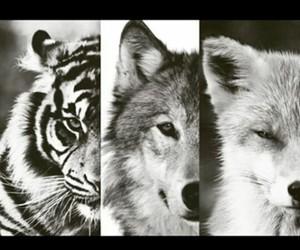 animal, fox, and tiger image