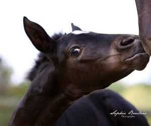 baby, horse, and kiss image
