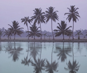 palm trees, water, and tree image