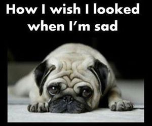 funny, dog, and sad image