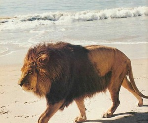 amazing, lion, and ocean image