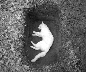 cat, dead, and death image