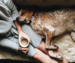 dog, coffee, and animal image