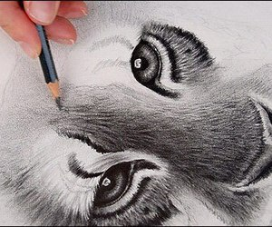 tiger, draw, and animal image