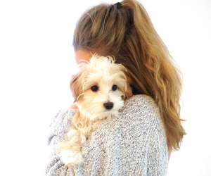 dog, girl thing, and it girl image