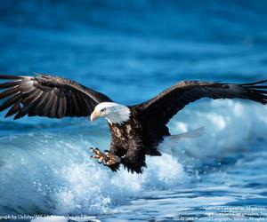 eagle and bird image