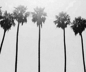 black and white, summer, and palm trees image