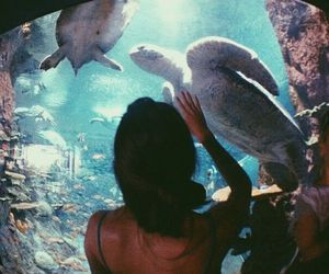 girl, turtle, and aquarium image