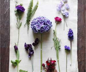 carnation, purple, and flowers image