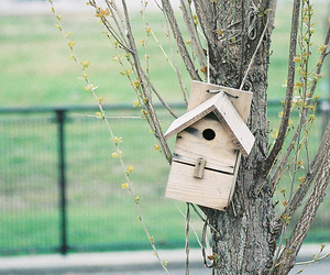 birdhouse, child, and summer image