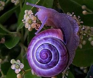 snail, purple, and flowers image