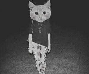 cat, girl, and hipster image