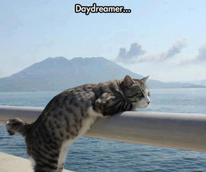 cat, funny, and daydreamer image