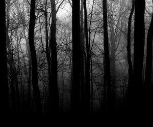 black and white, dark, and cold image