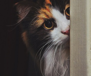 <3, animal, and cat image