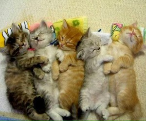 adorable, sleeping, and cute image