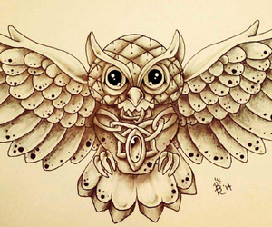 owl and cute image