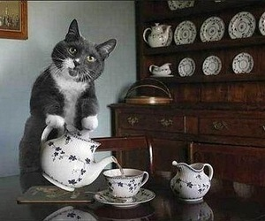 cat, tea, and animal image