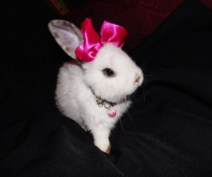 bunny, love, and pets image