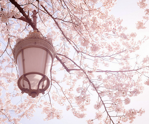 cute, flowers, and pink image