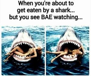 funny, shark, and bae image