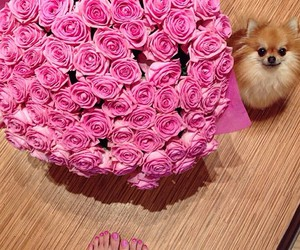 flowers, dog, and pink image