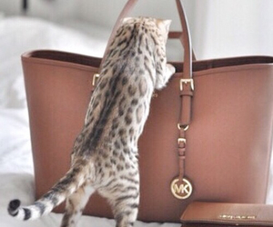 cat, bag, and Michael Kors image