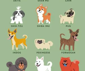 asian and dogs image