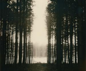 ff, trees, and haze image