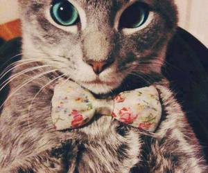 cat, cool, and style image