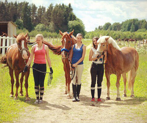 forest, horse riding, and horses image