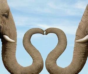 love, elephant, and animal image