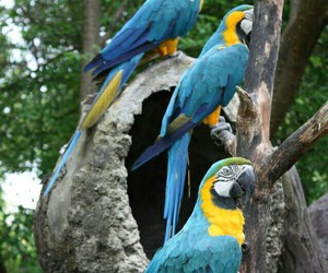 colorful, ecuador, and parrot image