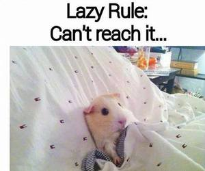 Lazy, bed, and funny image