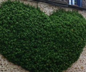 heart, green, and tree image