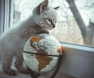 cat, world, and cute image