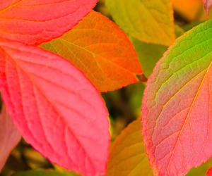 autumn, autumnal, and green image