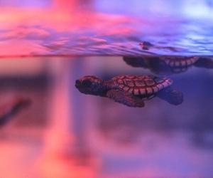 turtle, animal, and pink image