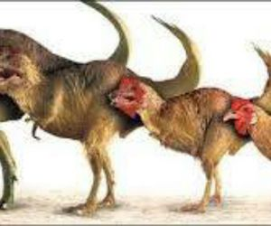 animals and evolution image