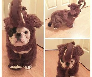 dog, costume, and elephant image