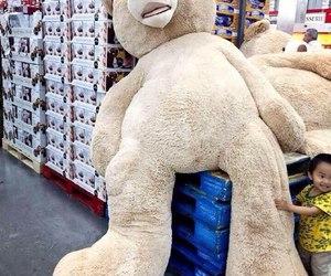 cute, bear, and big image